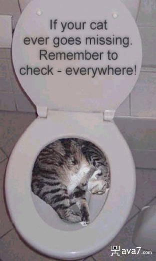 missing cat in toilet