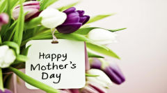 happy mothers day purple pink white tulips flowers holiday