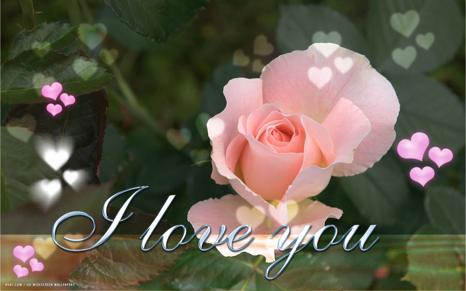 I Love You Text Pink Rose Flower Hearts Hd Widescreen Wallpaper Romantic Backgrounds