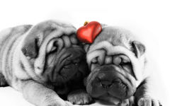 love romantic animals dogs cute pets heart