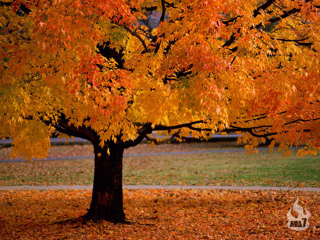 Beautiful Nature Wallpapers An Autumn Beauty wallpaper