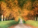 Autumn Road, Cognac Region, France wallpaper